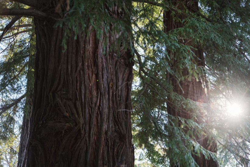 New Zealand Forest Stewardship Council Certified Forests Classified as Low Risk - Abodo Wood